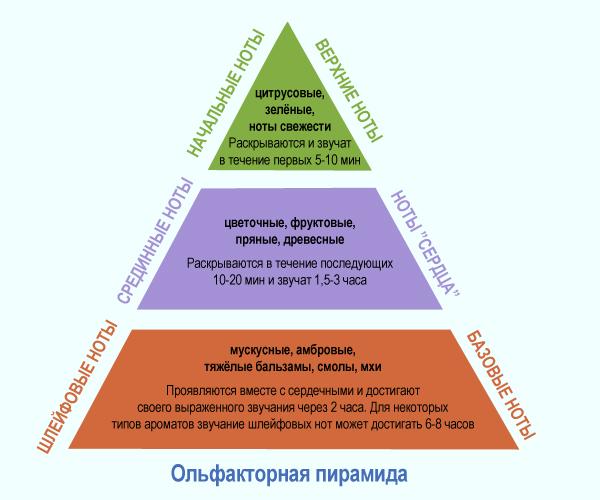 Картинки по запросу пирамида парфюма